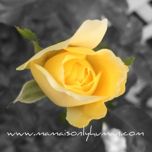 My moms favorite flower is a yellow rose. Ironically, it symbolizes friendship, which I am so grateful we have.